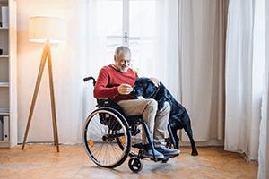 Labrador assiste disabile