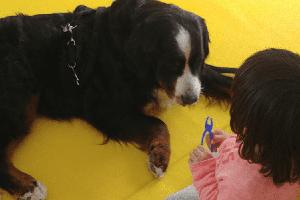 Cani Allerta Diabete