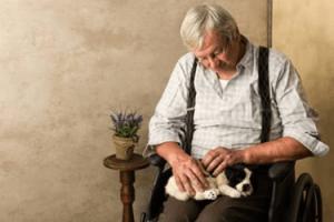 Cani Assistenza Demenza
